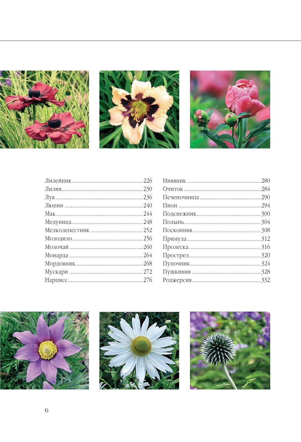 Садовые цветы купить в минске доставка цветов на дом суми