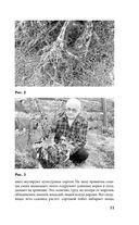 Сад и огород по-новому — фото, картинка — 11