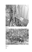Сад и огород по-новому — фото, картинка — 14