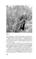 Сад и огород по-новому — фото, картинка — 10