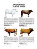 Мясо. Полное иллюстрированное руководство — фото, картинка — 6