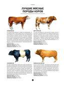 Мясо. Полное иллюстрированное руководство — фото, картинка — 8