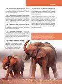 Красная книга. Животные мира — фото, картинка — 6