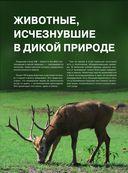Красная книга. Животные мира — фото, картинка — 7