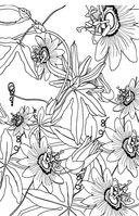 Зачарованный сад. Мини-раскраска-антистресс для творчества и вдохновения — фото, картинка — 10