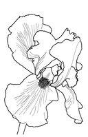 Зачарованный сад. Мини-раскраска-антистресс для творчества и вдохновения — фото, картинка — 11