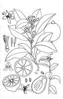 Зачарованный сад. Мини-раскраска-антистресс для творчества и вдохновения — фото, картинка — 7