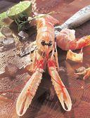 Рыба и морепродукты. Большая кулинарная книга — фото, картинка — 5