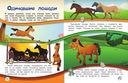 Лошади и пони — фото, картинка — 7