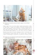 Мой любимый котенок. Как выбрать, воспитывать и ухаживать — фото, картинка — 14