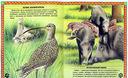 Большие и маленькие. Интересные факты о животных — фото, картинка — 2