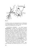 Виноград. Практические советы по выращиванию — фото, картинка — 12