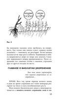 Виноград. Практические советы по выращиванию — фото, картинка — 13