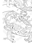 Дикие животные. Раскраска-антистресс для творчества и вдохновения — фото, картинка — 10