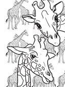 Дикие животные. Раскраска-антистресс для творчества и вдохновения — фото, картинка — 6