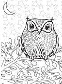 Дикие животные. Раскраска-антистресс для творчества и вдохновения — фото, картинка — 8