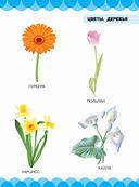 Цветы. Деревья — фото, картинка — 2