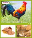 Разумные карточки. Животные. Где живут? Что едят? — фото, картинка — 1