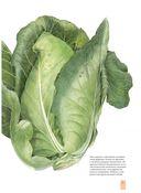 Портреты фруктов и овощей. Практическое руководство по рисованию акварелью — фото, картинка — 5