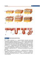 Атлас анатомии человека — фото, картинка — 7