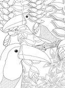 Райские птицы. Раскраска-антистресс для творчества и вдохновения — фото, картинка — 11