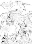 Райские птицы. Раскраска-антистресс для творчества и вдохновения — фото, картинка — 12