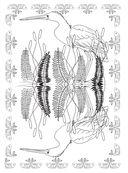 Райские птицы. Раскраска-антистресс для творчества и вдохновения — фото, картинка — 4