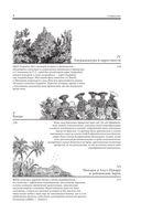 Путешествие в Индию и на Цейлон — фото, картинка — 8
