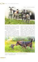 Дрессировка и воспитание собаки — фото, картинка — 16