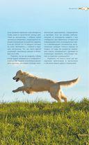 Дрессировка и воспитание собаки — фото, картинка — 7