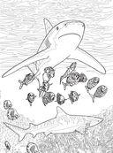 Коралловый риф. Раскраска-антистресс для творчества и вдохновения — фото, картинка — 12