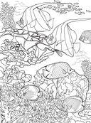 Коралловый риф. Раскраска-антистресс для творчества и вдохновения — фото, картинка — 13