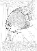 Коралловый риф. Раскраска-антистресс для творчества и вдохновения — фото, картинка — 5