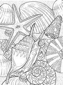Коралловый риф. Раскраска-антистресс для творчества и вдохновения — фото, картинка — 7