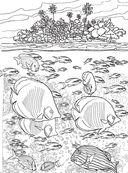 Коралловый риф. Раскраска-антистресс для творчества и вдохновения — фото, картинка — 9