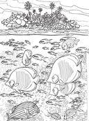 Коралловый риф. Раскраска-антистресс для творчества и вдохновения — фото, картинка — 10