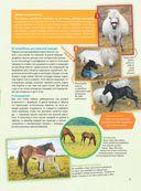 Большая энциклопедия. Лошади и пони — фото, картинка — 11