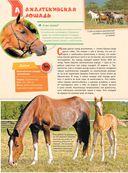 Большая энциклопедия. Лошади и пони — фото, картинка — 12