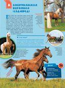 Большая энциклопедия. Лошади и пони — фото, картинка — 15