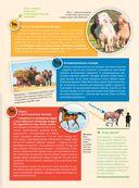 Большая энциклопедия. Лошади и пони — фото, картинка — 3