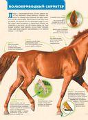 Большая энциклопедия. Лошади и пони — фото, картинка — 6