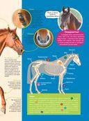 Большая энциклопедия. Лошади и пони — фото, картинка — 7