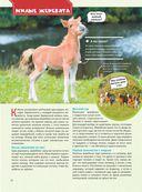 Большая энциклопедия. Лошади и пони — фото, картинка — 10