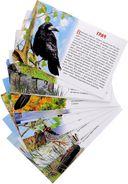 Перелетные птицы России. Обучающие карточки — фото, картинка — 1