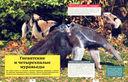 Животные — фото, картинка — 1