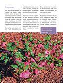 Стильный цветник. Популярная энциклопедия — фото, картинка — 13