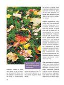 Стильный цветник. Популярная энциклопедия — фото, картинка — 14