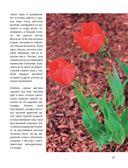 Стильный цветник. Популярная энциклопедия — фото, картинка — 15