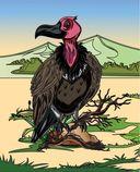 Птицы. Раскраски из сказки — фото, картинка — 6
