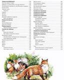 Новая иллюстрированная энциклопедия животного мира — фото, картинка — 3